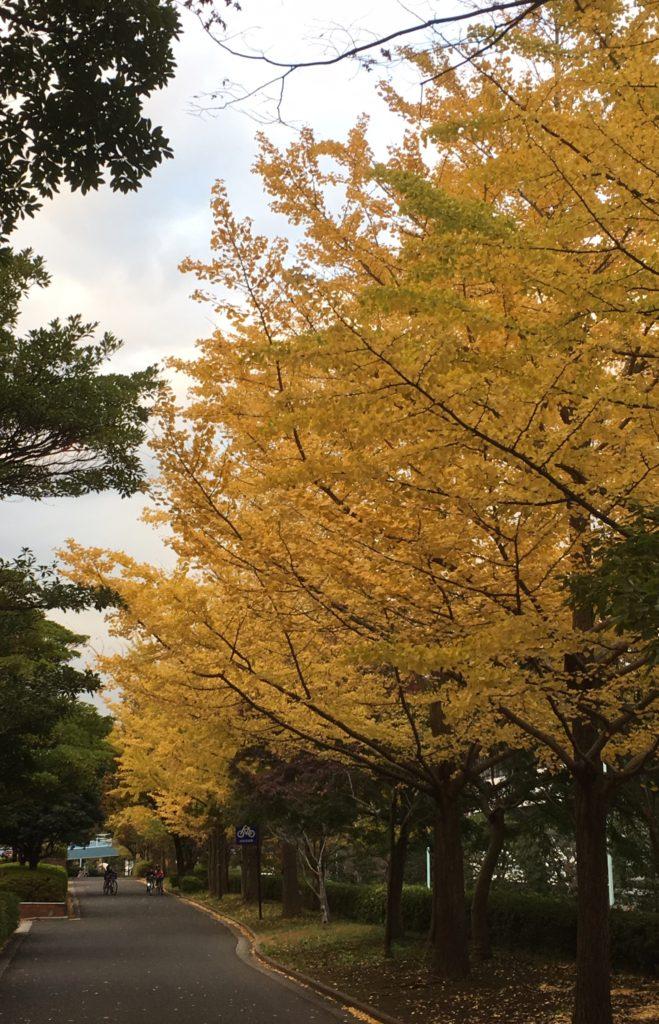 紅葉した近所の緑道