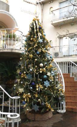 アンジュのクリスマスツリー